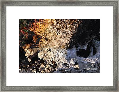 Curves And Colors In Nature Framed Print by Todd A Blanchard