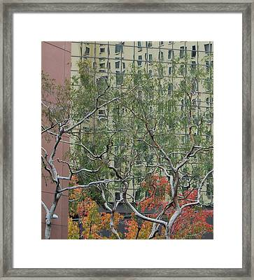 Curves And Lines Framed Print by Jean Booth