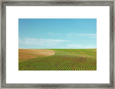 Curvy Rows Framed Print