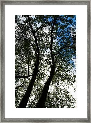 Curvy Trees Framed Print