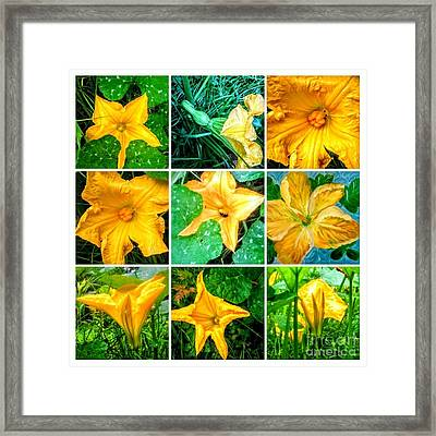 Cushaw Blossom Collage Framed Print