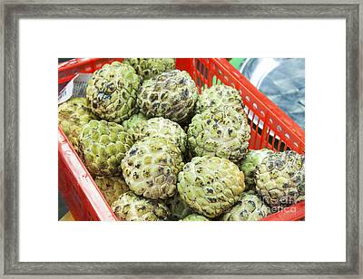 Custard Apples Annona Squamosa Framed Print