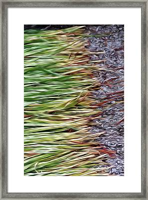 Cut Grass And Pebbles Framed Print
