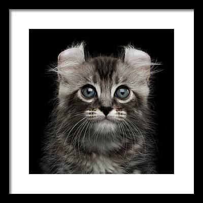 Cute Kitten Framed Prints