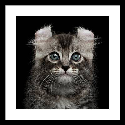Kittens Framed Prints