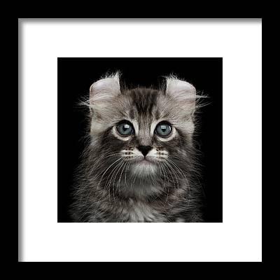 Kitten Framed Prints