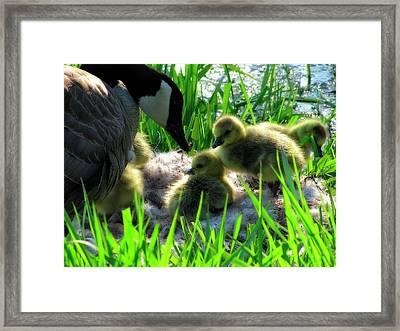 Cute And Fuzzy - Take 3 Framed Print by Scott Hovind