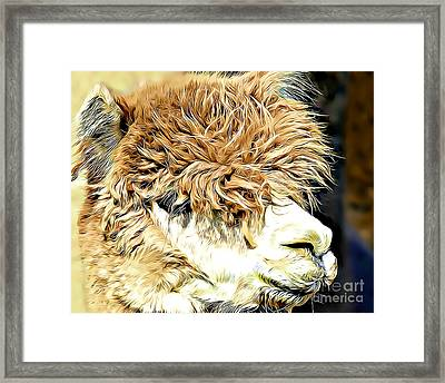 Soft And Shaggy Framed Print by Kathy M Krause