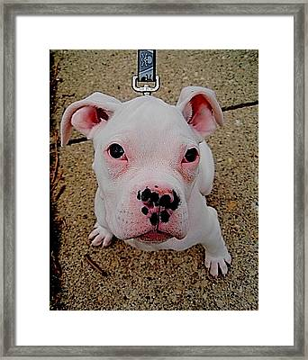 Cute And Tough Framed Print