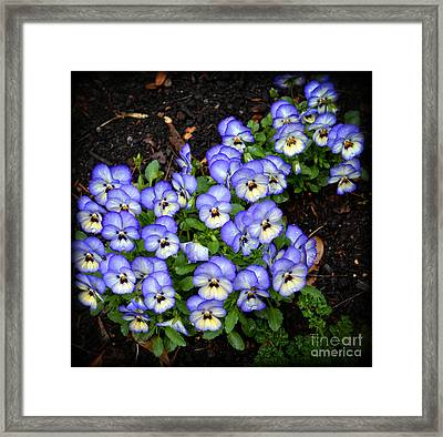Cute As Buttons Framed Print by Eva Thomas