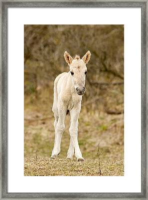 Cute Baby Horse Framed Print by Roeselien Raimond