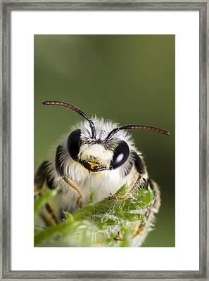 Cute Bee Framed Print by Andre Goncalves
