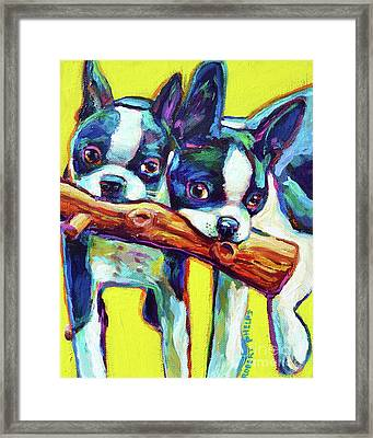 Cute Boston Terriers Framed Print by Robert Phelps