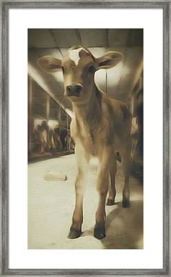 Cute Calf  Framed Print