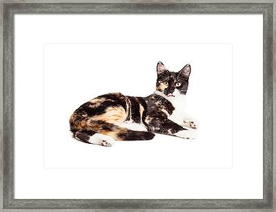 Cute Calico Kiten Sticking Tongue Out Framed Print
