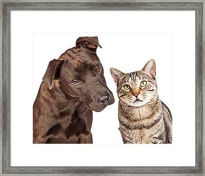 Cute Cat And Dog Closeup Photo Framed Print by Susan Schmitz