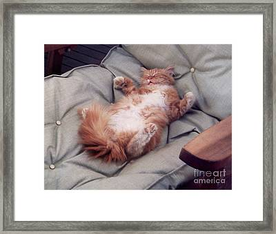 cute cat pictures - Another Rough Day Framed Print