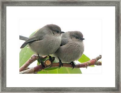 Cute Chicks Framed Print
