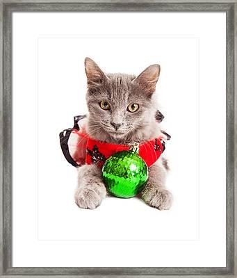Cute Christmas Kitten Looking Into Camera Framed Print by Susan Schmitz