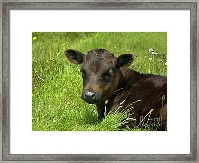 Cute Cow Framed Print