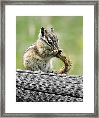 Cute Critter Framed Print by Nicole Belvill