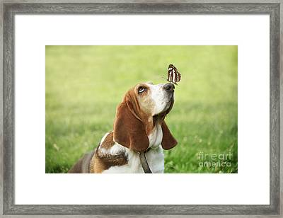Cute Dog With Butterfly On His Nose Framed Print