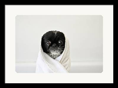 Wrapped In A Towel Framed Prints