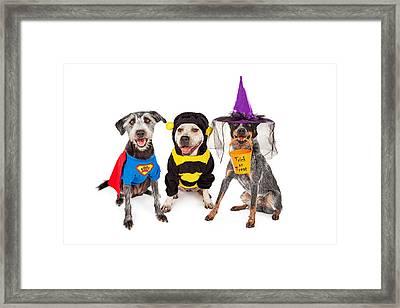 Cute Dogs Wearing Halloween Costumes Framed Print by Susan Schmitz