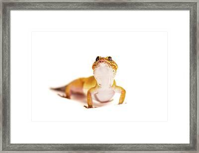 Cute Gecko Framed Print by Svetlana Svetlanistaya