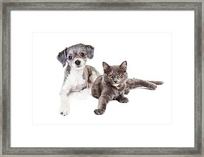 Cute Grey Kitten And Puppy Laying Together Framed Print by Susan Schmitz