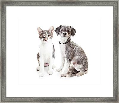 Cute Grey Kitten And Puppy Sitting Together Framed Print by Susan Schmitz
