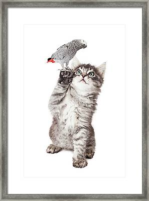 Cute Kitten Holding Parrot Bird Framed Print