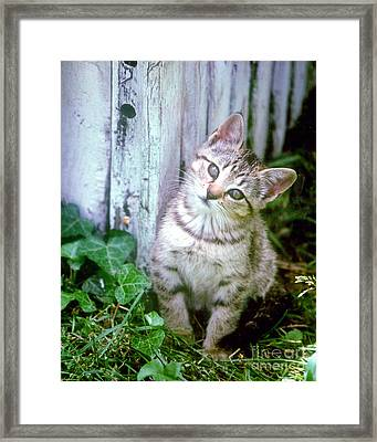 Cute Kitten Pose Framed Print