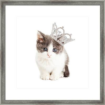 Cute Kitten Wearing Princess Crown Framed Print by Susan Schmitz