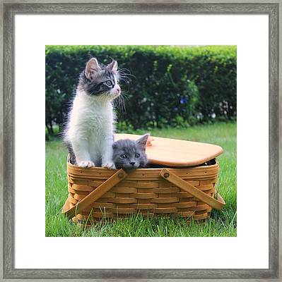 Cute Kittens Escaping From Basket Framed Print