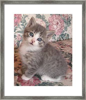 Cute Kitty Framed Print by Allison Prior