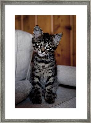 Framed Print featuring the photograph Cute by Laura Melis