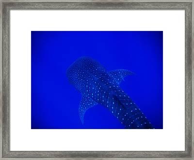 Cute Little Fishy...... Framed Print by Strato ThreeSIXTYFive