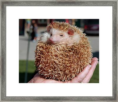 Cute Little Hedge Ball Framed Print