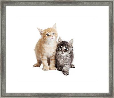 Cute Orange And Black Tabby Kittens Together Framed Print