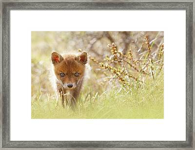 Cute Overload - Baby Fox Kit Framed Print by Roeselien Raimond