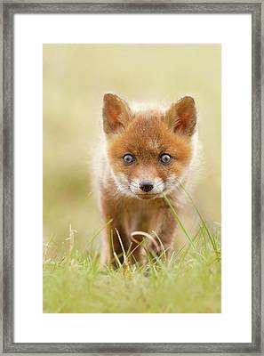 Cute Overload - Red Fox Kit Framed Print by Roeselien Raimond