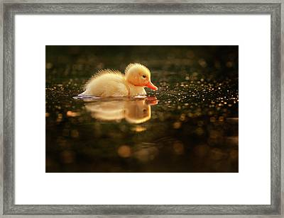 Cute Overload Series - Baby Duck Framed Print by Roeselien Raimond