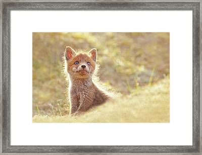 Cute Overload Series - Baby Fox Looking Up Framed Print
