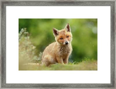 Cute Overload Series - Best Baby Fox Ever Framed Print