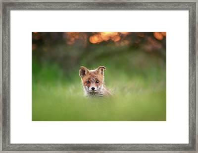 Cute Overload Series - Cute Baby Fox Framed Print