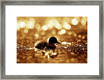 Cute Overload Series - Duckling Reflections Framed Print