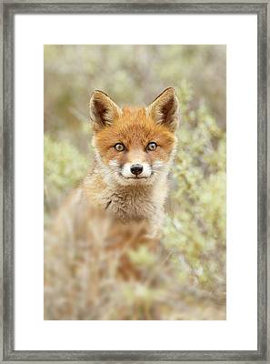 Cute Overload Series - Happy Baby Fox Framed Print