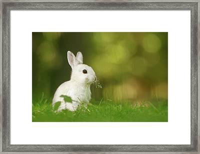 Cute Overload Series - Happy White Rabbit Framed Print
