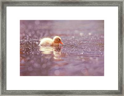Cute Overload Series - Yellow Duckling Framed Print
